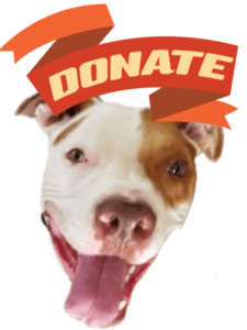 Leto is asking you nicely to donate today!