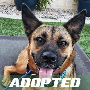 Navi has been adopted