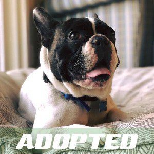 Remy was Adopted!