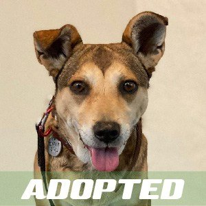 Happy has been adopted!