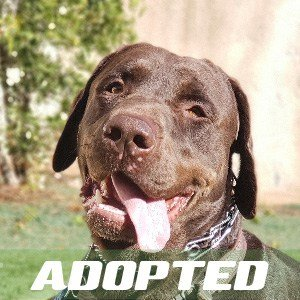 Max Has Been Adopted!