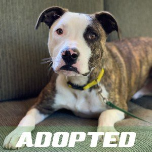 Pip's Been Adopted!