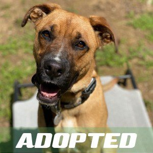 Harley Quinn has been adopted!