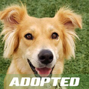 Amber has been adopted
