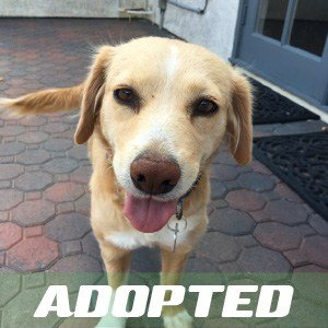 Charlie has been adopted.