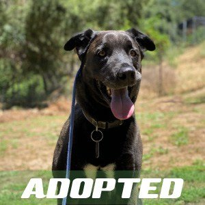 Crash has been adopted.