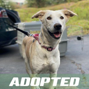 Lady has been adopted.