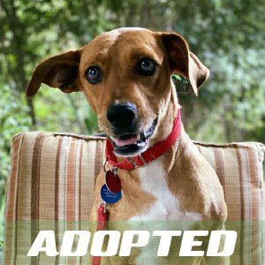 Red has been adopted.