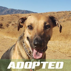 Annie Has Been Adopted!