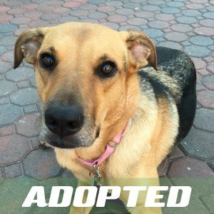 Ruby Has Been Adopted