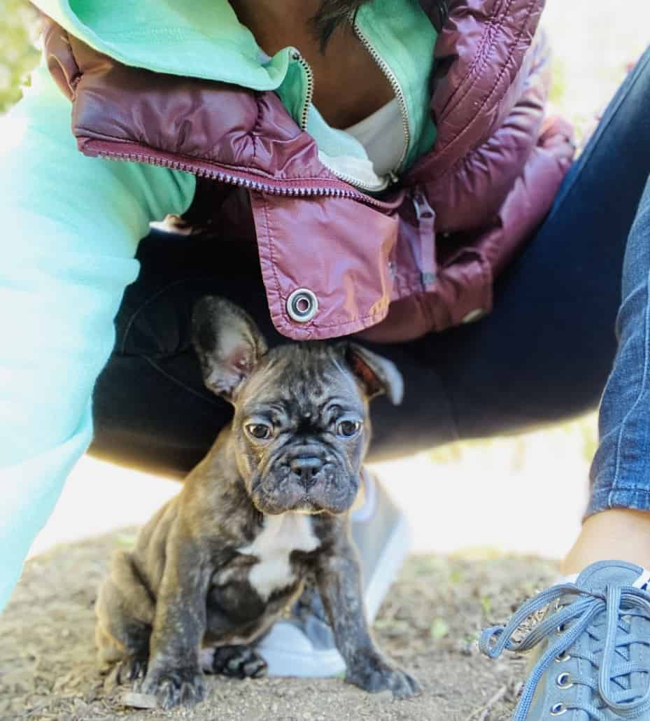 Bruce, the French bulldog puppy who will feature in this virtual class.
