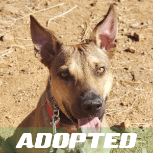 Diego Has Been Adopted