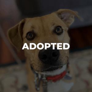 Nala Has Been Adopted!