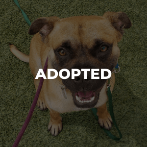Bently Has Been Adopted!