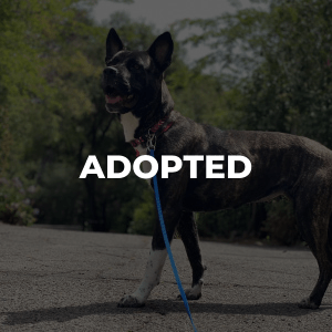 Sloan Has Been Adopted!