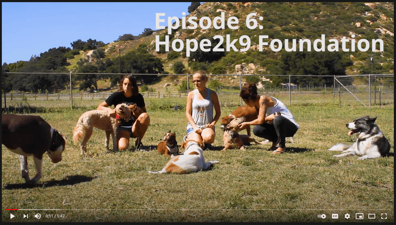 Hope2K9 Foundation being featured in Solar Cribs